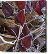 Frosted Red Green Briar Canvas Print