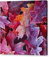 Frosted Red Oak Leaves Canvas Print