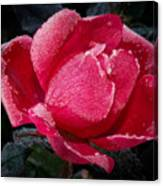 Frosted Rose Canvas Print
