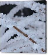 Frosted Twigs Canvas Print