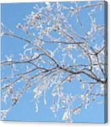 Frosty Branch Canvas Print