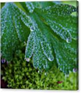 Frosty Dewdrops Canvas Print