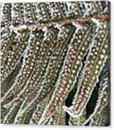 Frosty Fern - 365-322 Canvas Print