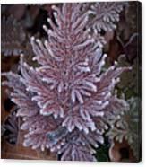 Frosty Fern Christmas Canvas Print