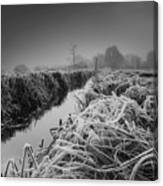 Frosty Field Canvas Print