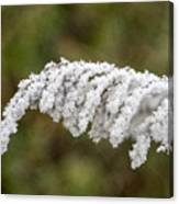Frosty Frond Canvas Print