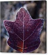 Frosty Lighted Leaf Canvas Print
