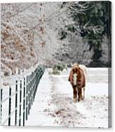 Frosty Mare Canvas Print