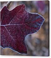 Frosty Maroon Leaf Canvas Print