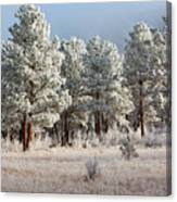 Frosty Pikes National Forest Canvas Print