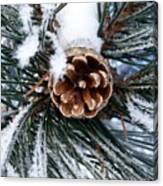 Frosty Pine Cone Canvas Print