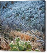 Frosty Prickly Pear Canvas Print