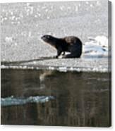 Frosty River Otter  Canvas Print