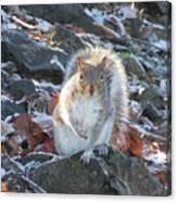 Frosty Squirrel Canvas Print