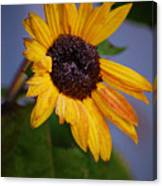 Frosty Sunflower Canvas Print