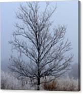Frosty Tree Canvas Print