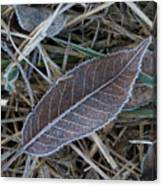 Frosty Veined Leaf Canvas Print