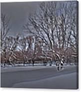 Frozen At The Creek's Edge Canvas Print