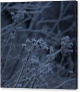 Frozen Buds Canvas Print