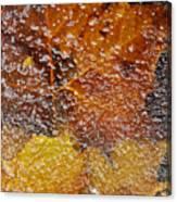 Frozen Colors  Canvas Print