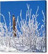 Frozen Fence Post Canvas Print