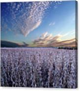 Frozen Fields Canvas Print