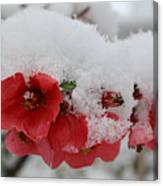 Frozen Flowers Canvas Print