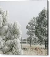 Frozen Fog On Pine Trees Canvas Print