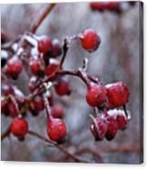 Frozen Fruit Canvas Print