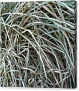 Frozen Grass - Ground Frost Canvas Print