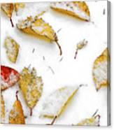 Frozen Leaves Canvas Print