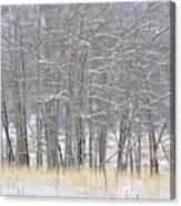 Frozen Limbs Canvas Print