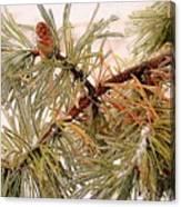 Frozen Pine Canvas Print