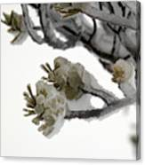 Frozen Pines 1 Canvas Print