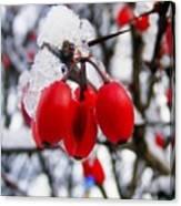 Frozen Red Berries Canvas Print