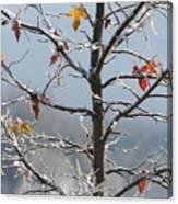 Frozen Remnants Canvas Print