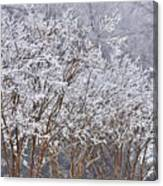 Frozen Trees During Winter Storm Canvas Print