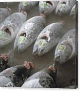 Frozen Tuna Fish At The Tsukiji Canvas Print