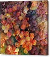 Fruit Of The Vine Canvas Print