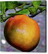 Fruit On The Tree Canvas Print