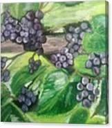 Fruit On The Vine Canvas Print