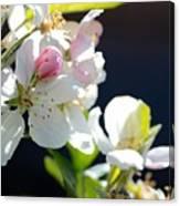 Fruit Tree Blossom Canvas Print