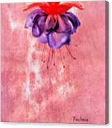 Fuchsia Blue Eyes Canvas Print