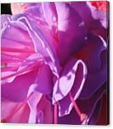 Fuchsia Frills Canvas Print