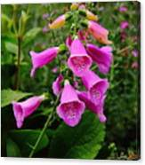 Foxglove Lure Canvas Print