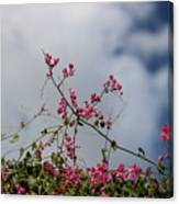 Fuchsia Mexican Coral Vine On White Clouds Canvas Print