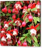 Fuchsia Pastel Canvas Print