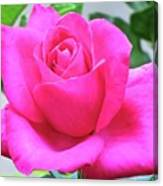 Fuchsia Rose Canvas Print