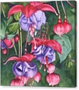 Fuchsia Trio Canvas Print