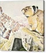 Fuertes, Louis Agassiz 1874-1927 - Burgess Animal Book For Children 1920 Pika Canvas Print